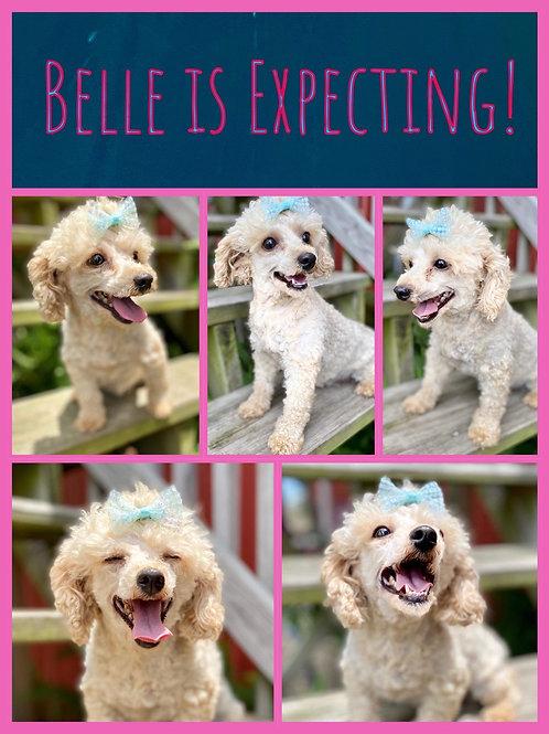 Belle & Gizmo $2200