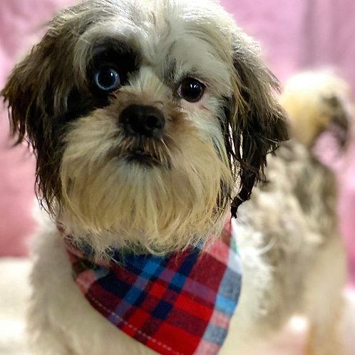 Ivy Pups $1500