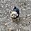 Thumbnail: Addy Pups $1500
