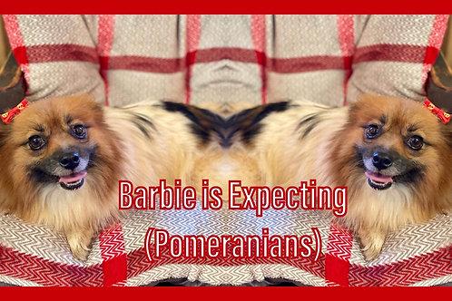 Barbie Puppies $1500