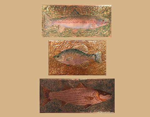 Fish cologe.jpg