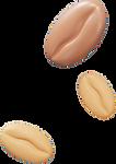 Bean 2_edited.png