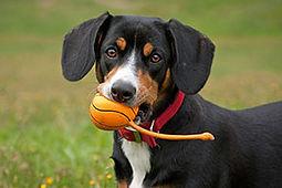 dog-w-ball-1.jpg
