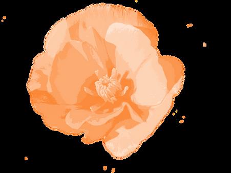 poppy_background.png