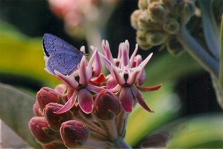 carousel_butterfly2.jpg