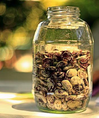 Seeds of the Season