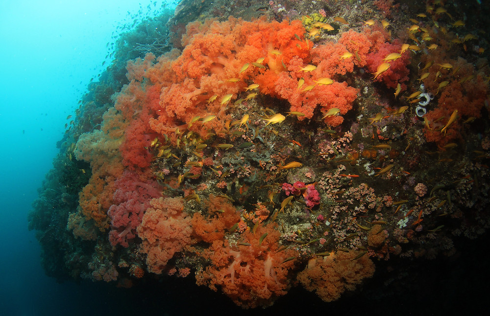 Colorfull Softcorals at Pescador Island