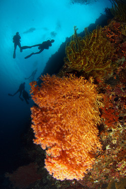 Divers in Cabilao