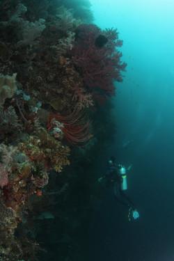 Diver on a drop off