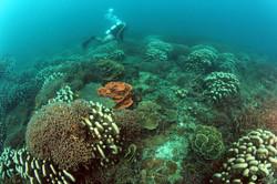 04 Die Artenvielfalt der Korallen ist gross