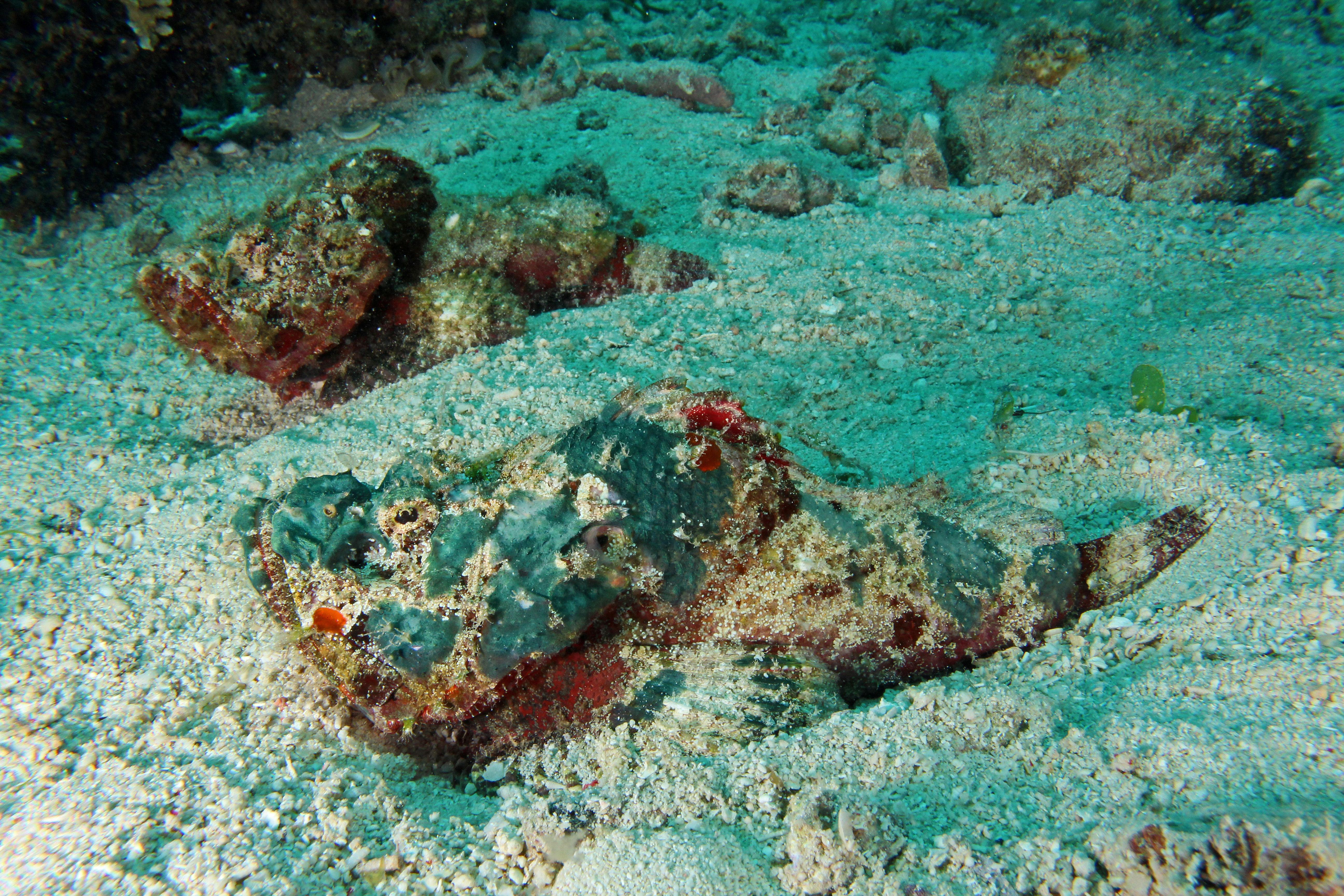 Falshe Stonefish