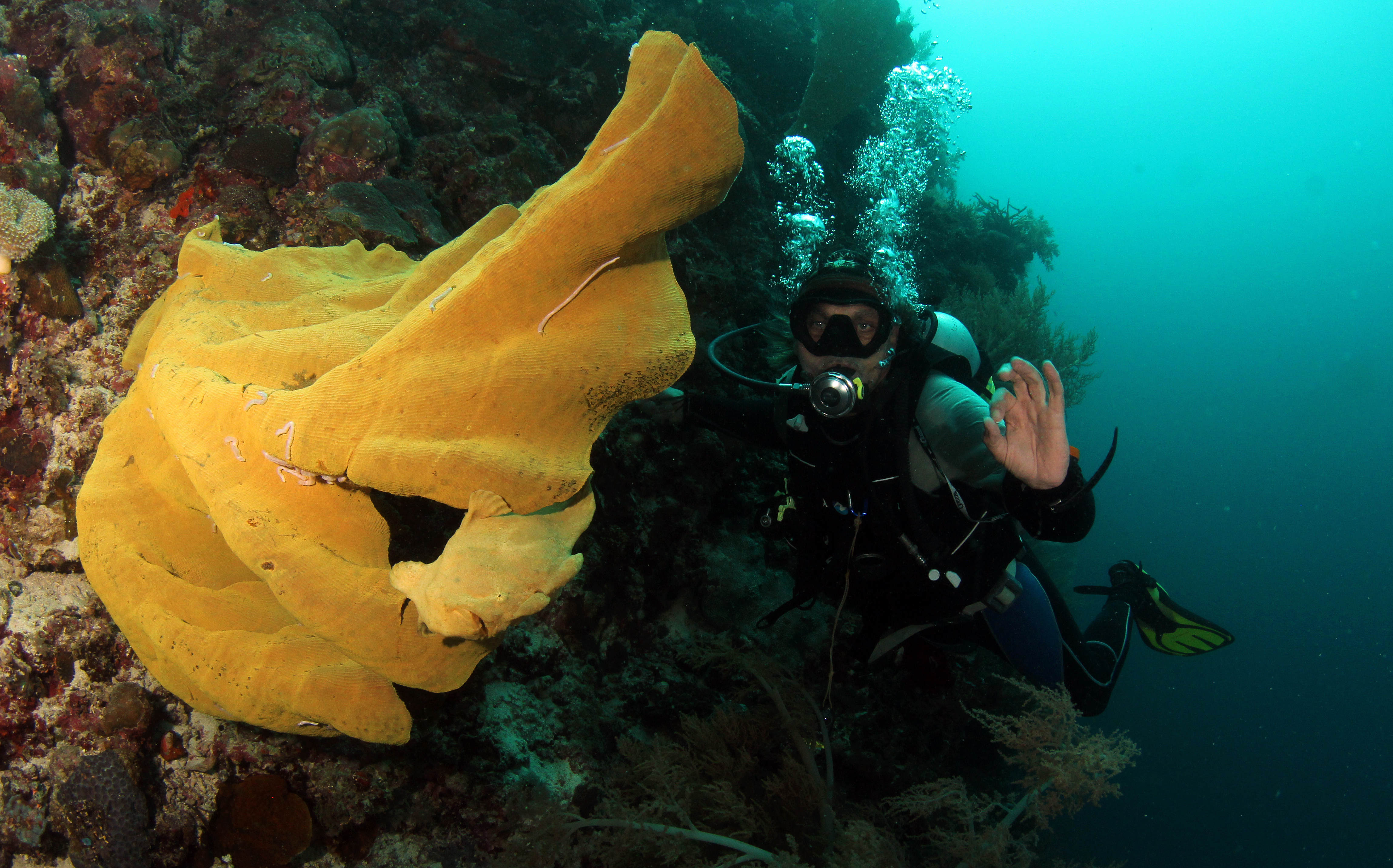 Giant Frogfish and diver