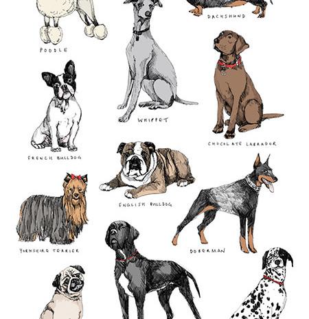 Twelve Breeds