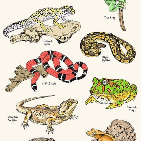 Reptile Guide