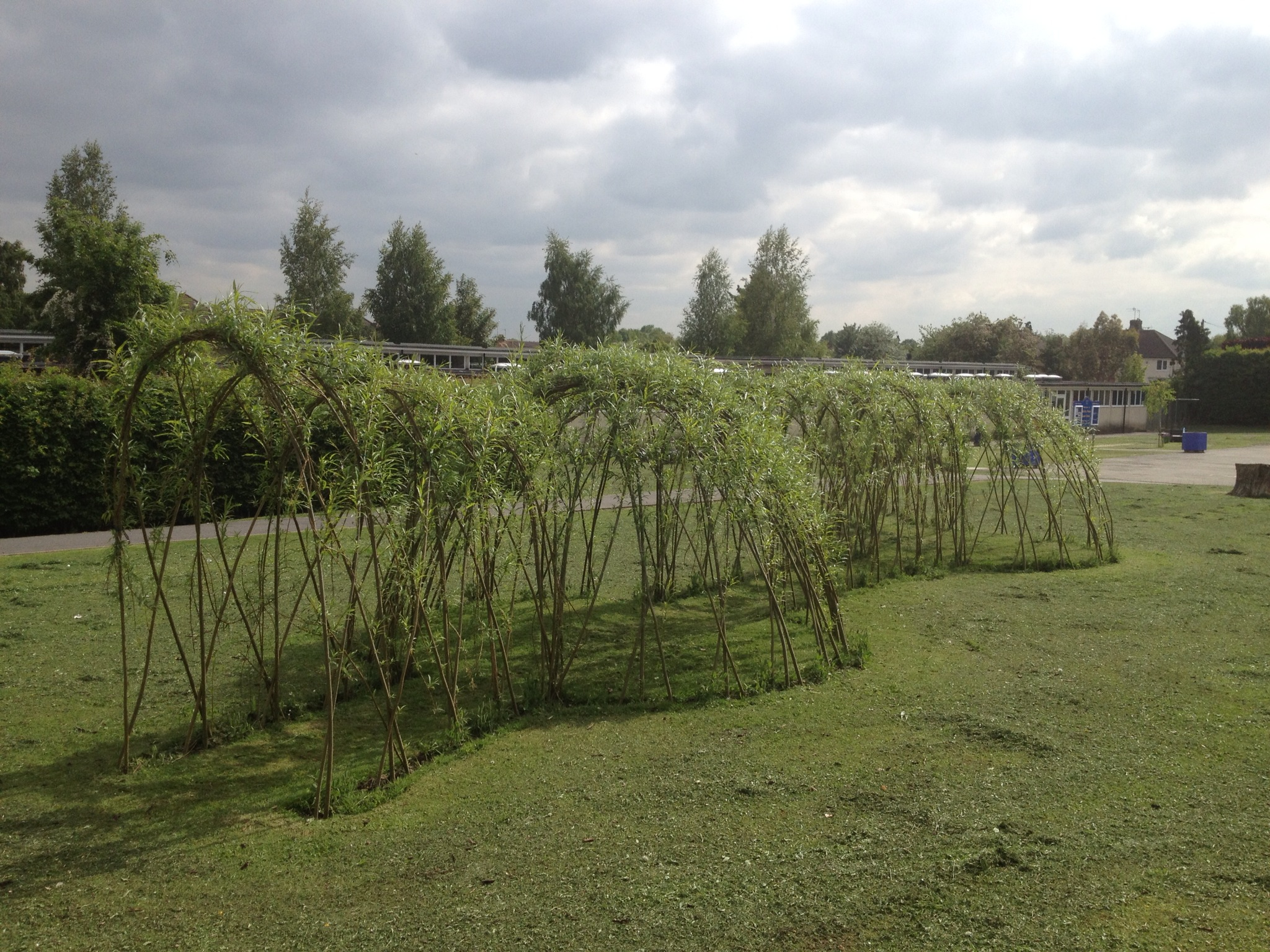living willow domes and tunnels