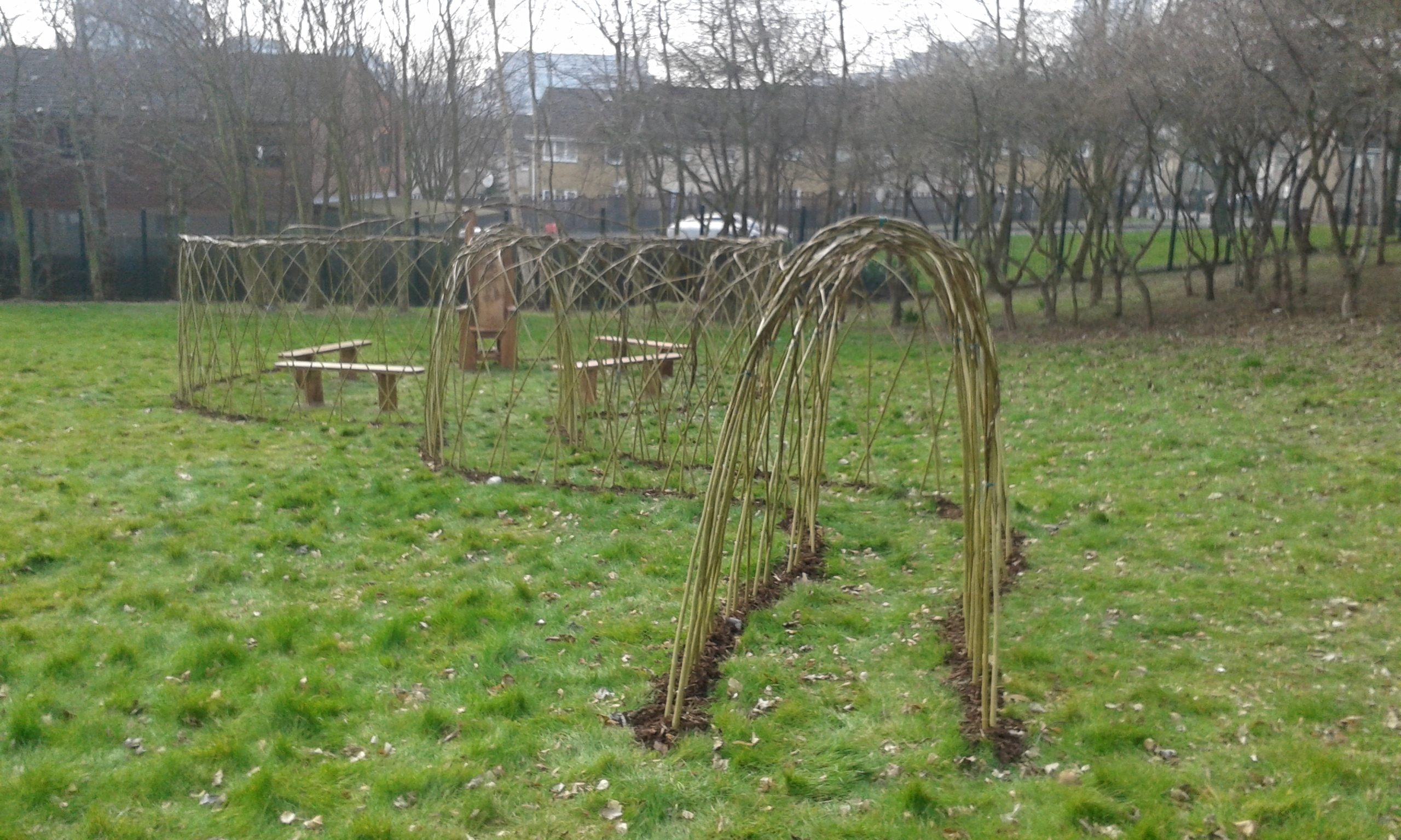 Living willow screen