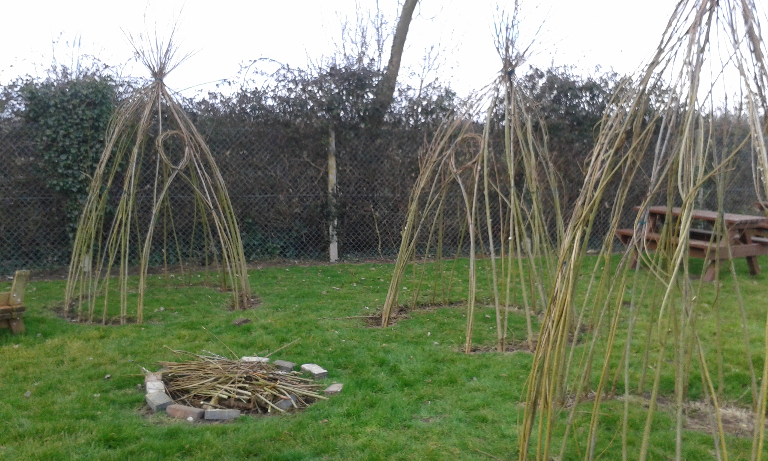 Living Willow Pods