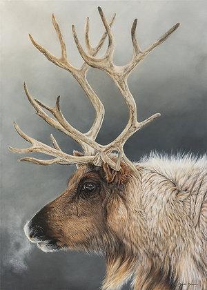 Dans l'œil du caribou