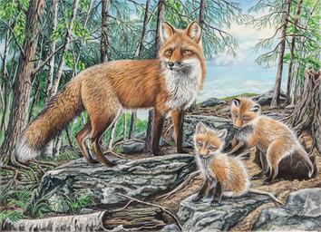 La petite famille de renard roux