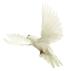 dove-png-13.png
