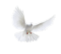 pigeon_PNG3416.png