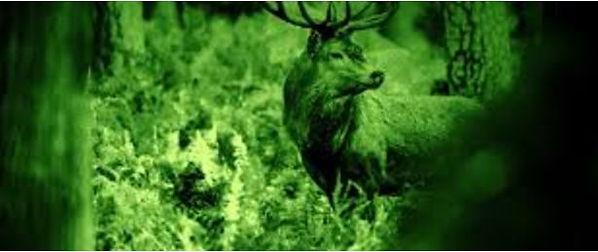 NV deer.jpg