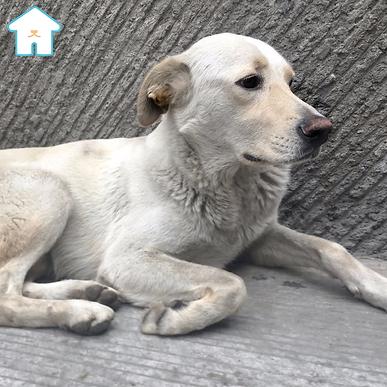 Toby es un perrito de Casa Heim que se encuentra en adopción, es muy juguetón y tierno.