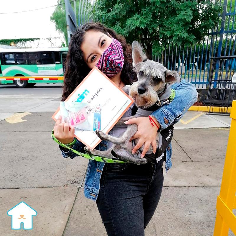 cookie, adopcion de perros cdmx