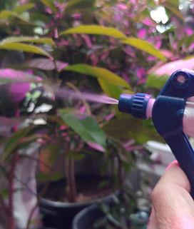 Organic, Safe Bug Spray