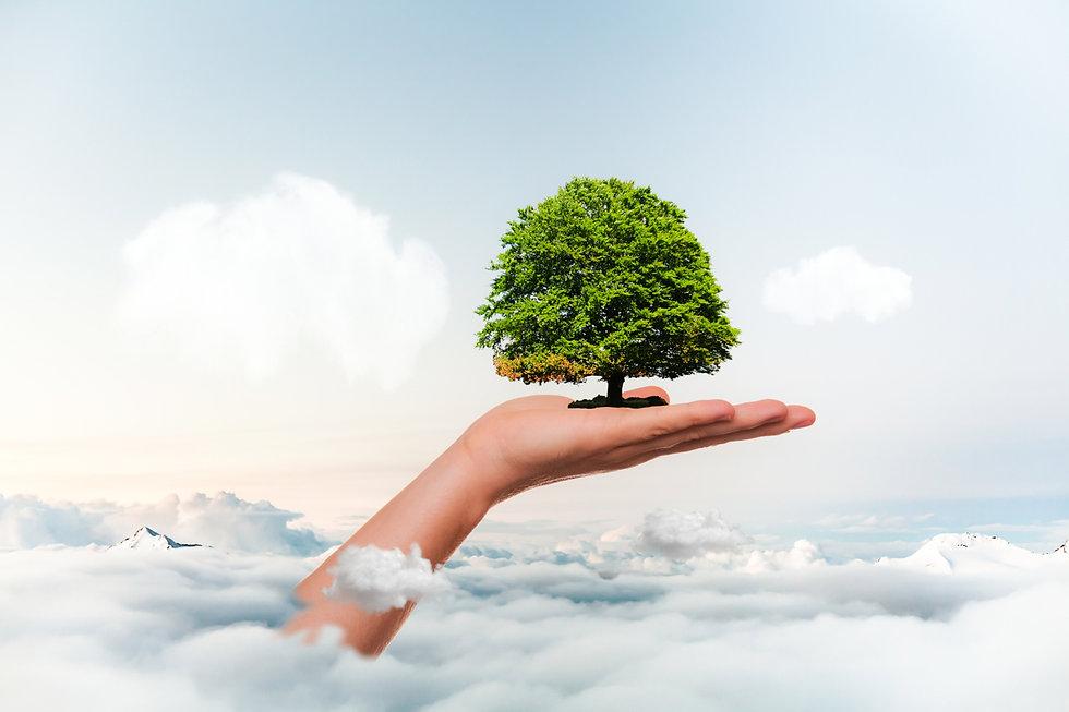 save-planet-nature-tree-leafs-environmen