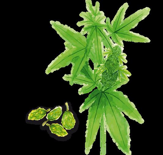 Cannabisblueten.png