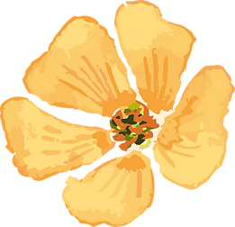 Bachblüte_orange.png