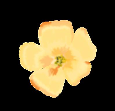 Bachblüte 2_orange_unscharf.png
