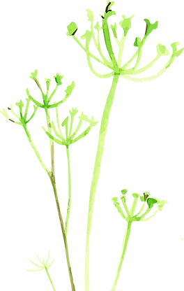 Fenchel1.png
