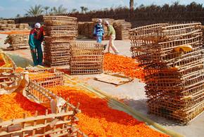 Ringelblumen-Einkauf in Ägypten