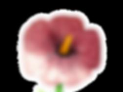 Malve1_unscharf Kopie_bearbeitet.png