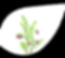 NEU_#KLE_Bärentraube_Inhaltsstoffe.png