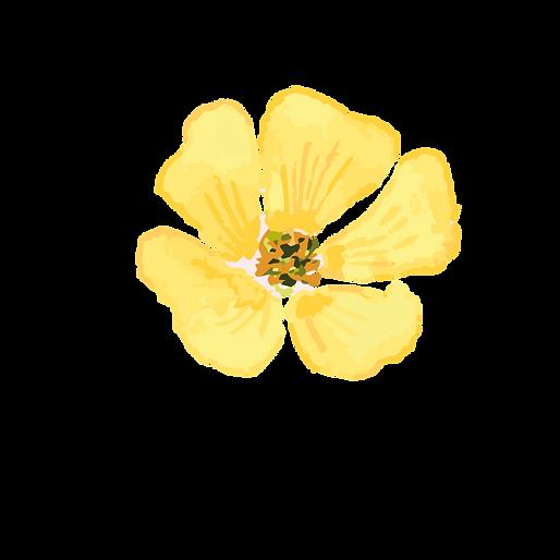 Original Blüte scharf alkoholfrei.png