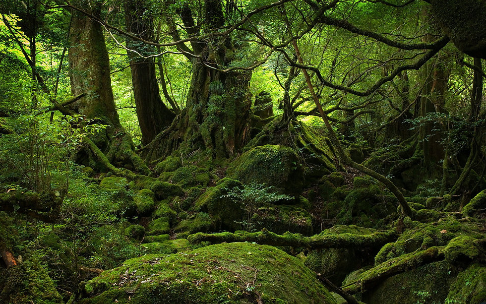 Forrest-Green-Nature.jpg