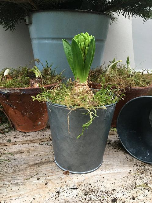 Vintage Style Zinc Bulb Pot
