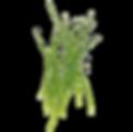 Micro_Leek-removebg-preview.png