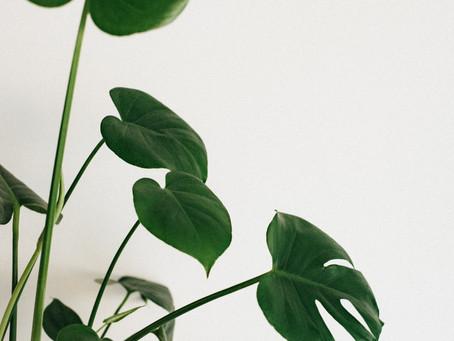 Why do houseplants make me happy?