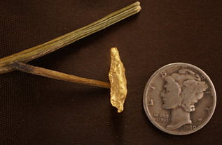 Small Gold Nugget gnm194