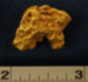 Large Gold Nugget The Schnoz gnm102