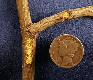 Genuine Nevada Gold gnm184