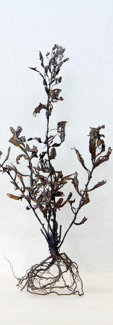 Taboo, 2019, Bronze 40x20x15 cm.jpg