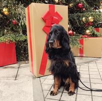 Tierisch fröhliche Weihnachten