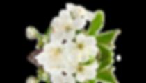 Terapias com Florais de Bach