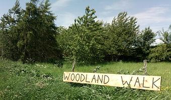 woodland walk at moor farm.jpg