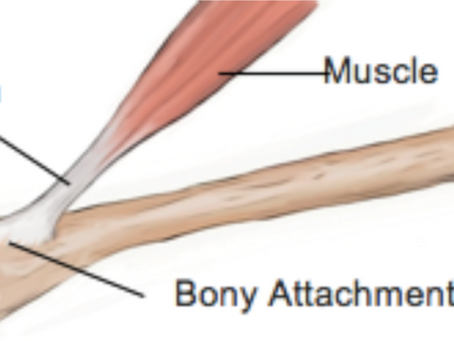Law 2 - Ligament's & Tendons Strengthen them.
